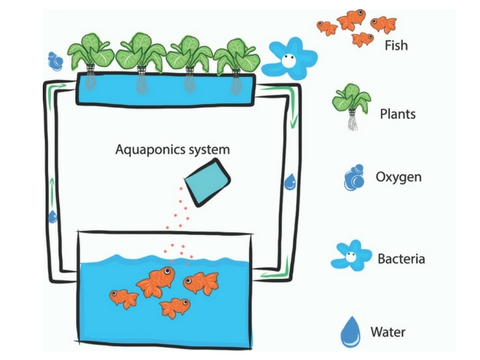 Aquaponics And Kids: Fun, Learning And Growing Food Together